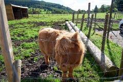 Andscapes και χωριά των ορεινών περιοχών, Σκωτία Στοκ εικόνα με δικαίωμα ελεύθερης χρήσης