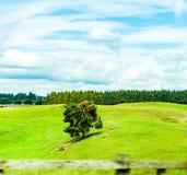 Andscapes των γεωργικών τομέων που φωτογραφίζονται από το αυτοκίνητο πλησίον Στοκ Εικόνες