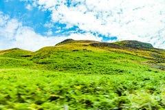 Andscapes dei campi agricoli fotografati dall'automobile vicino Immagine Stock