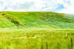 Andscapes dei campi agricoli fotografati dall'automobile vicino Fotografia Stock