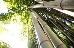 anduze bambouseraie法国 免版税库存图片