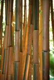 anduze bambouseraie法国 免版税图库摄影