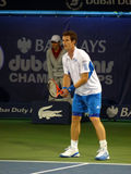 Andy Murray Tennis Star. DUBAI, UAE - FEBRUARY 22: England's Andy Murray competing in Men's Singles Event during Dubai Tennis Championships 2010 on February 22 Royalty Free Stock Images