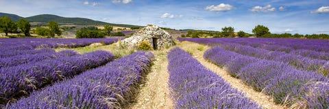 Ane lavendelfält för gammal borie i Provence Arkivbilder