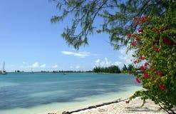 anegada海滩海岛 库存图片