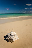 Anegada Explorations Royalty Free Stock Photography