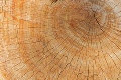 Anel anual na árvore cortada foto de stock