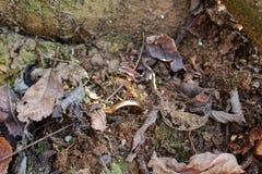 Anel colado na terra foto de stock