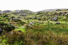 Anel da grama do Kerry - Irlanda Imagem de Stock