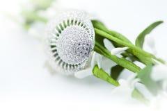 Anel da jóia com brilliants Imagens de Stock