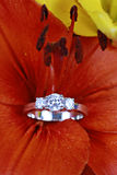 Anel de diamante na flor   foto de stock