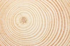 Anel de madeira Imagem de Stock Royalty Free