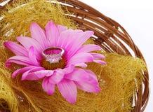 Anel de noivado com a flor da camomila do rosa quente na cesta isolada fotos de stock