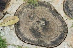 Anel do tronco de árvore no assoalho foto de stock