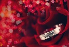 Anel e Rosa Imagens de Stock
