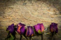 Anel e rosas secas obscuras na textura de madeira, amor seco no Valentim, foco seleto Imagens de Stock Royalty Free