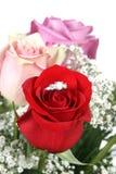Anel em Rosa Fotografia de Stock Royalty Free
