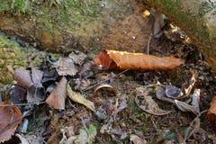 Anel na terra em uma floresta do inverno imagens de stock royalty free