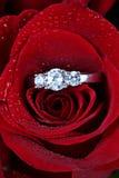 Anel nas pétalas cor-de-rosa vermelhas Fotos de Stock