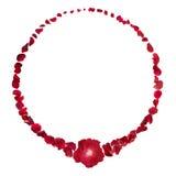Anel vermelho de Rosa Imagens de Stock Royalty Free