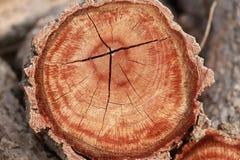 Anelli annuali di legname dell'albero fotografia stock