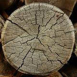 Anelli annuali su un vecchio albero del taglio. Immagine Stock