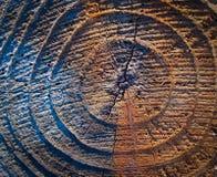 Anelli annuali in un tronco di albero immagine stock libera da diritti