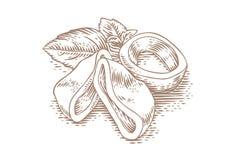 Anelli del calamaro con basilico fotografia stock