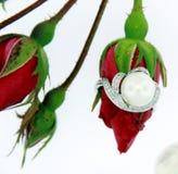 Anelli della perla Fotografia Stock