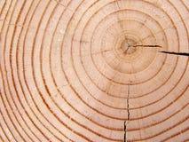 Anelli di albero Immagini Stock Libere da Diritti