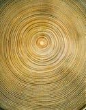 Anelli di albero Fotografie Stock