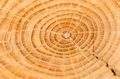 Anelli di albero Fotografie Stock Libere da Diritti