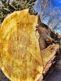 Anelli di albero a colori Immagini Stock Libere da Diritti