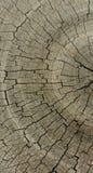 Anelli di albero del dettaglio della natura Fotografia Stock Libera da Diritti
