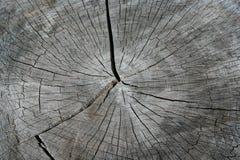 Anelli di albero di un ceppo fotografie stock libere da diritti