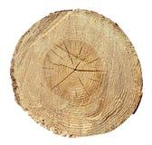Anelli di albero, legno, ceppo Struttura di legno Immagine Stock
