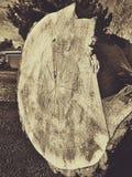 Anelli di albero nella seppia Fotografia Stock Libera da Diritti