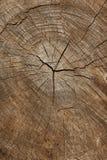 Anelli di anno dell'albero Immagini Stock