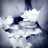 Anelli di cerimonia nuziale con i fiori Fotografia Stock