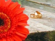 Anelli di cerimonia nuziale dell'oro Fotografie Stock Libere da Diritti