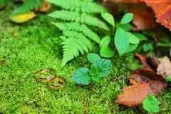 Anelli di cerimonia nuziale dell'oro e foreste verdi Immagine Stock