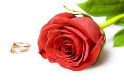 Anelli di cerimonia nuziale della rosa e dell'oro di colore rosso Fotografia Stock Libera da Diritti