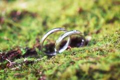 Anelli di cerimonia nuziale nell'erba Fotografia Stock