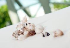 Anelli di cerimonia nuziale su corallo davanti alla spiaggia Fotografia Stock