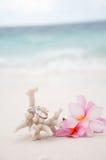 Anelli di cerimonia nuziale su corallo davanti alla spiaggia Immagini Stock
