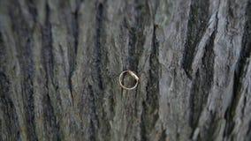Anelli di cerimonia nuziale su legno la fede nuziale su fondo di legno Fedi nuziali su vecchio fondo di legno vecchie fedi nuzial Immagini Stock Libere da Diritti