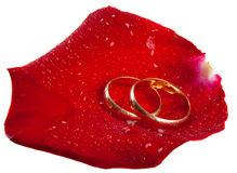 Anelli di cerimonia nuziale su un petalo di rosa, isolato fotografie stock