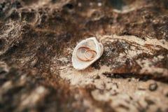 Anelli di cerimonia nuziale sulla spiaggia Immagini Stock