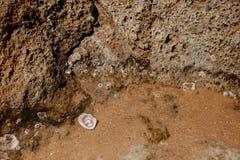 Anelli di cerimonia nuziale sulla spiaggia Fotografia Stock