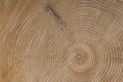 Anelli di crescita di un tre, albero attillato Immagini Stock